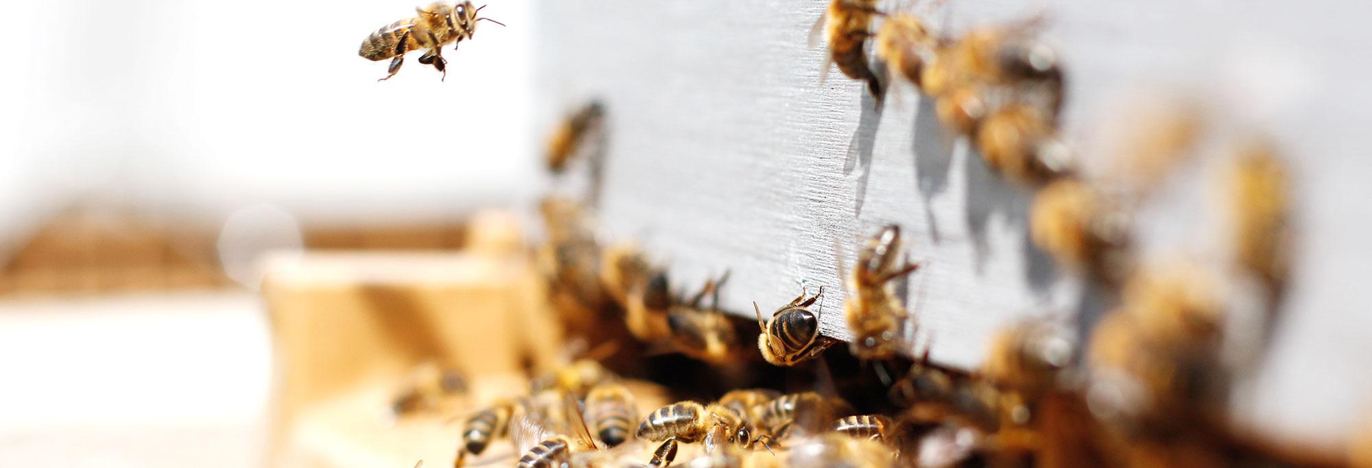 Photo-Row-Hive